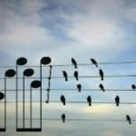 article-chant-oiseaux-portee-150x150