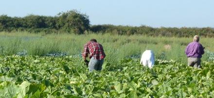 limites-agricole