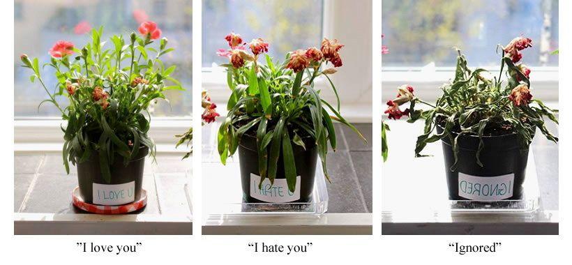 experience emoto plantes