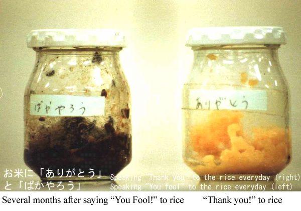 experience emoto sur le riz